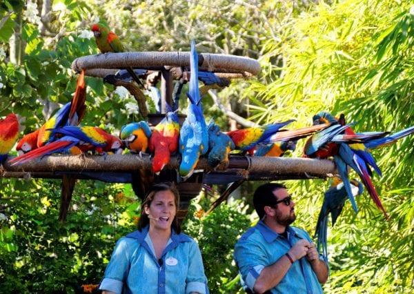 Flights of Wonder Bird Show Expanding