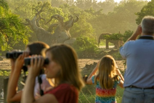 New Elephant Tour in Disney's Animal Kingdom