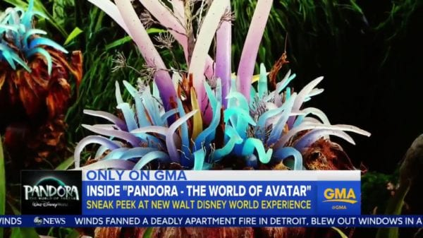 Good Morning America Sneak Peak at Pandora