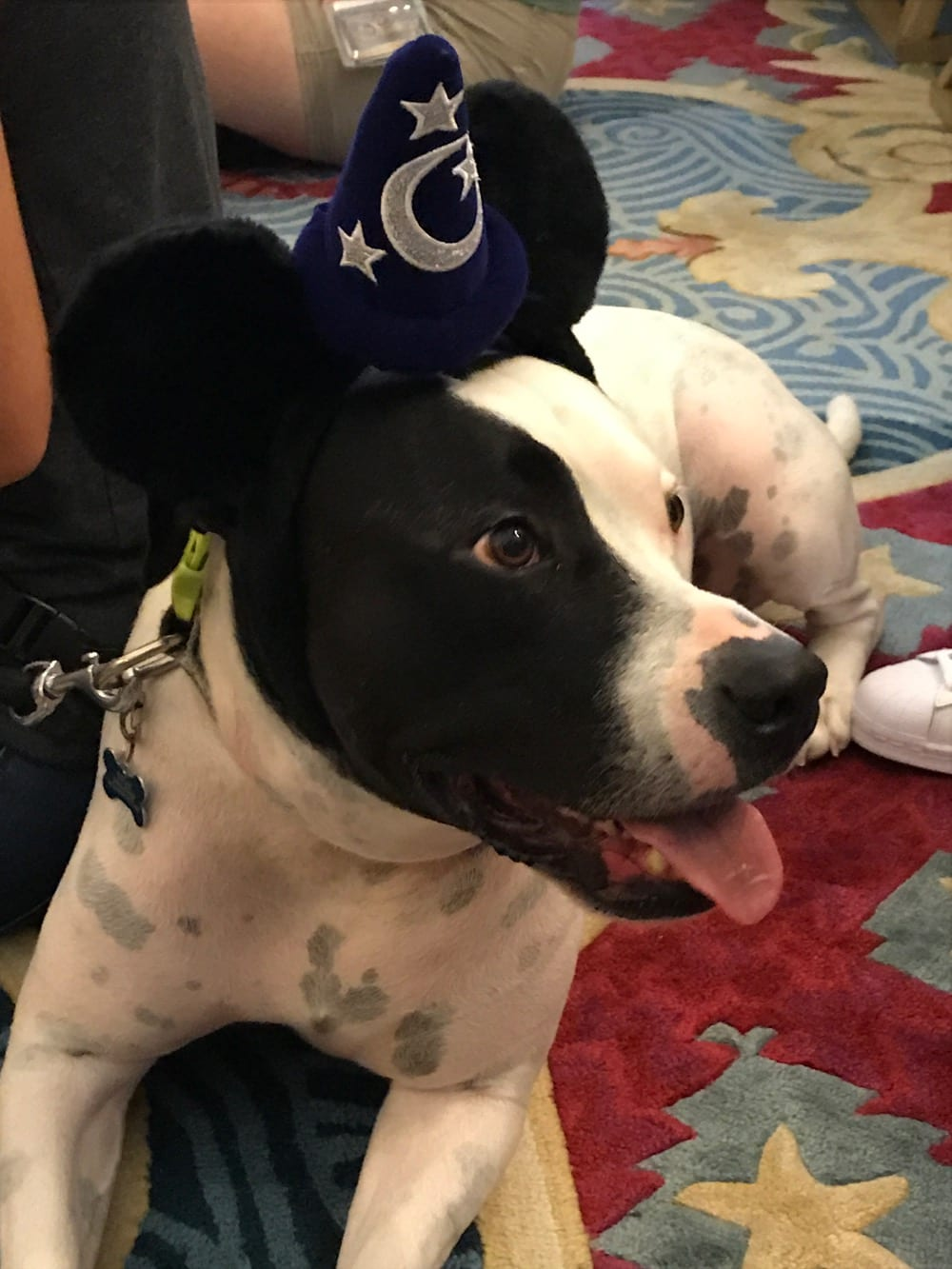Dogs allowed in certain walt disney world resorts ziggy for Dog kennels near disney world