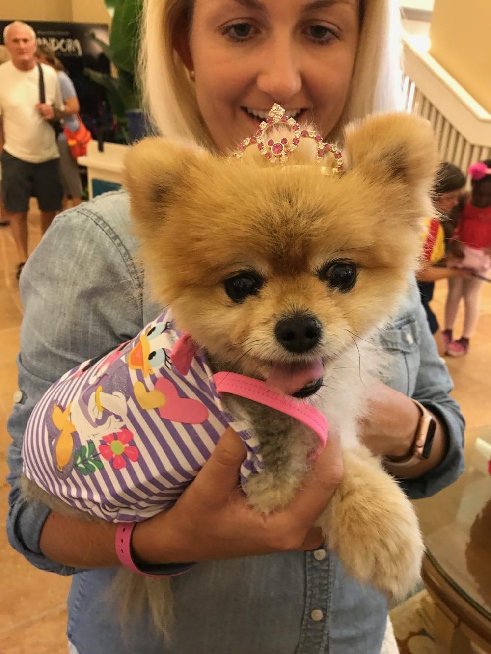 Dogs Allowed In Certain Walt Disney World Resorts Ziggy