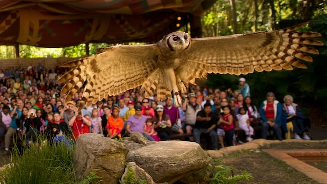 Flights of Wonder Disney's Animal Kingdom Closing in 2017