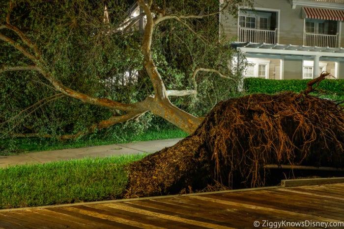 Hurricane Irma in Walt Disney World upside down tree yacht club