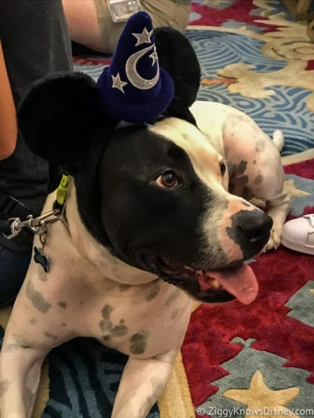Hurricane Irma in Walt Disney World beach club Dog Show dog with Mickey ears