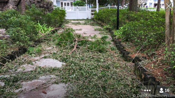 Hurricane Irma in Walt Disney World beach club branches down