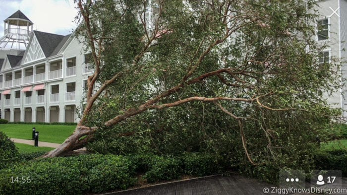 Hurricane Irma in Walt Disney World trees down 13