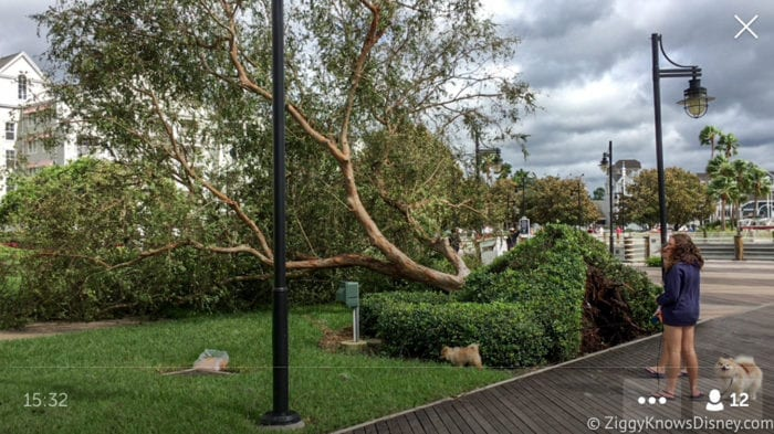 Hurricane Irma in Walt Disney World trees down 12