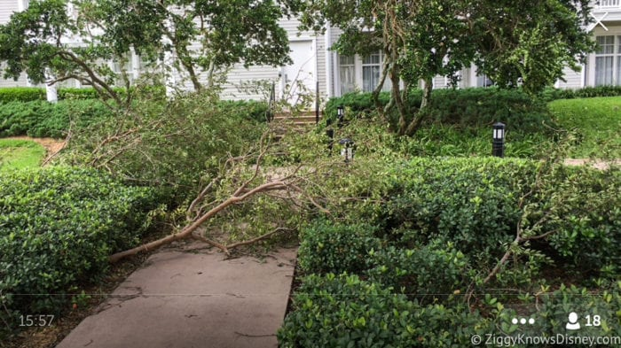 Hurricane Irma in Walt Disney World trees down 11