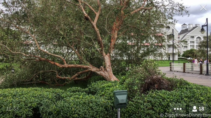 Hurricane Irma in Walt Disney World trees down 10