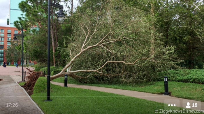 Hurricane Irma in Walt Disney World trees down 9
