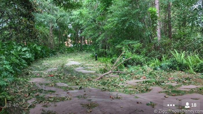 Hurricane Irma in Walt Disney World trees down 7