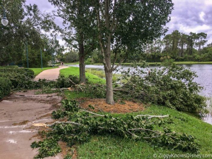Hurricane Irma in Walt Disney World trees down 5