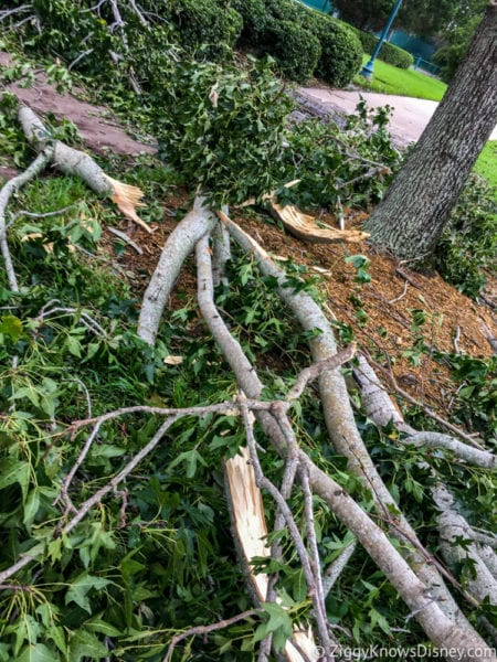 Hurricane Irma in Walt Disney World trees down 4