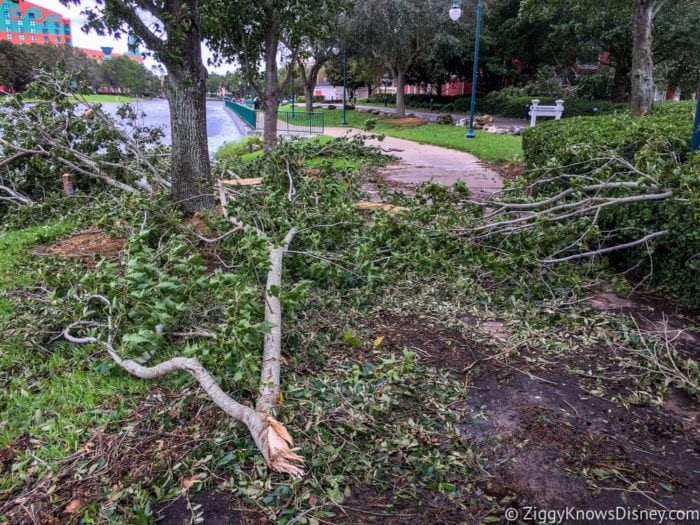 Hurricane Irma in Walt Disney World trees down 3