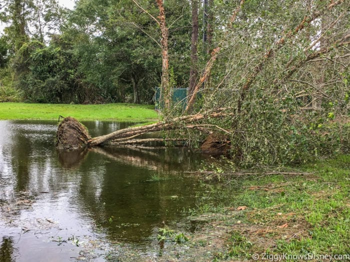 Hurricane Irma in Walt Disney World tree down 2