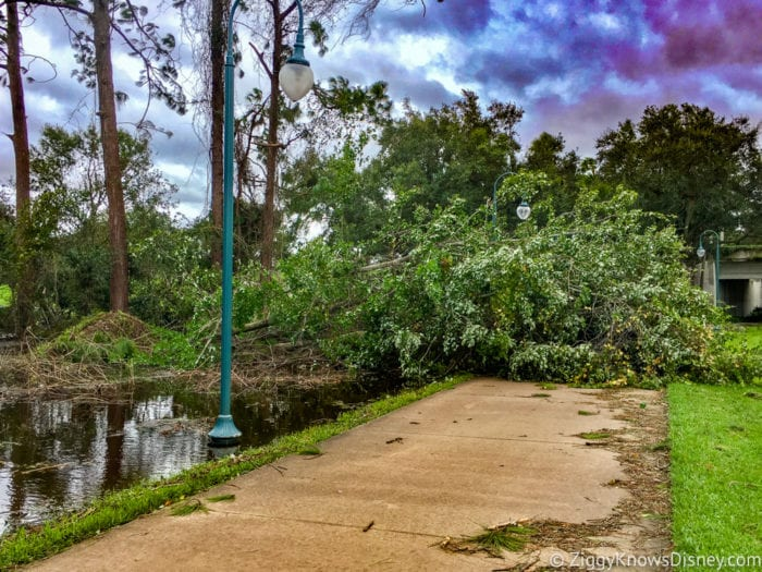 Hurricane Irma in Walt Disney World tree down going to Hollywood Studios