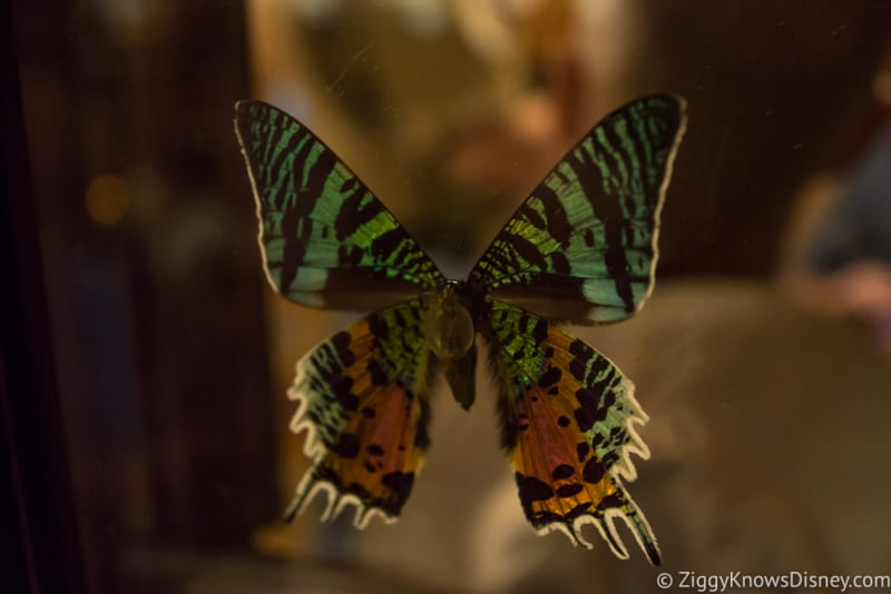 Skipper Canteen Review butterfly 1