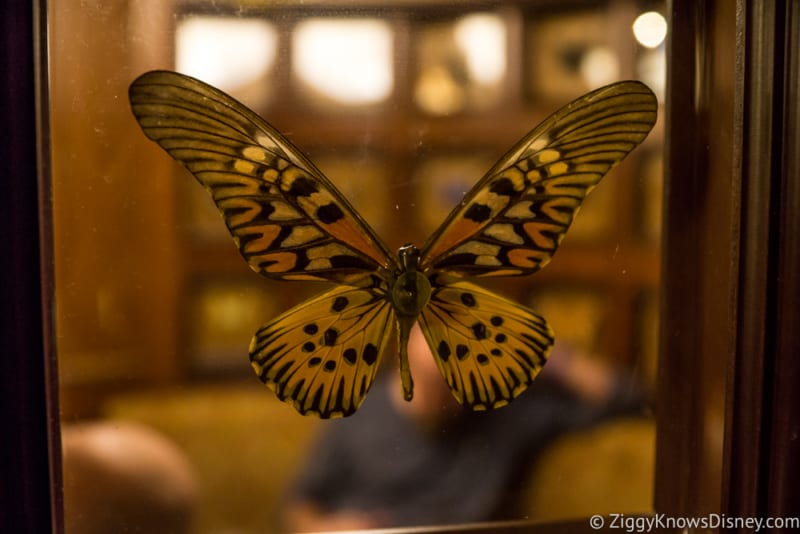 Skipper Canteen Review butterfly 2