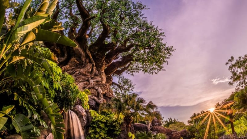 Disney's Animal Kingdom 20th Anniversary Events in April Look Incredible