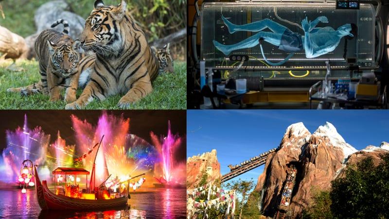 Disney Parks Live Streaming Event for Disney's Animal Kingdom Anniversary Celebration