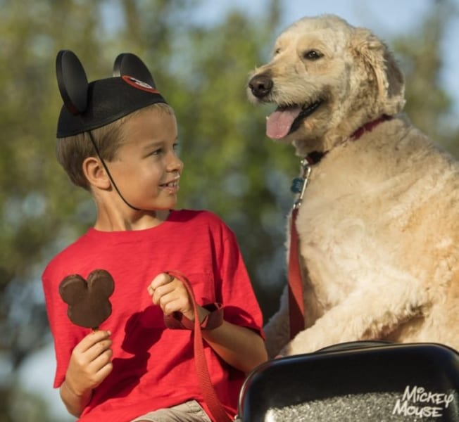 Walt Disney World to Permanently Allow Dogs in Some Hotels